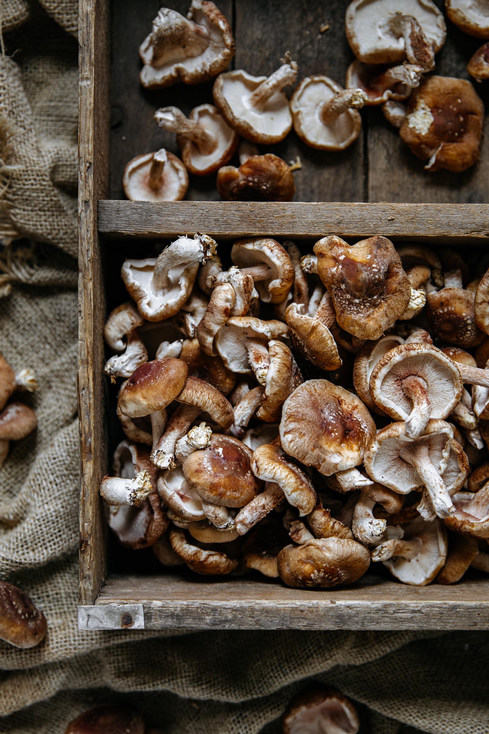 Crate of shiitake mushrooms