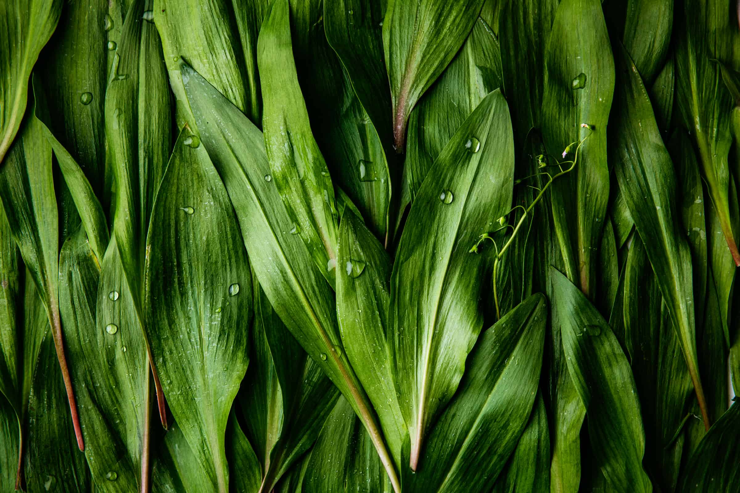 Close up of ramps with water drops